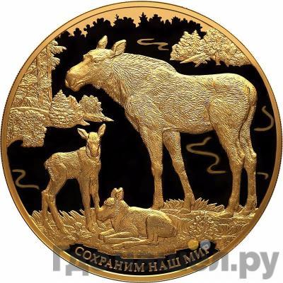 Аверс 10000 рублей 2015 года СПМД . Реверс: Сохраним наш мир лось